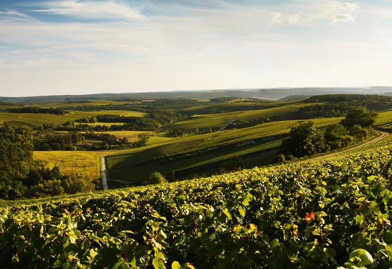 Vignes des Riceys ©DeBeauchene