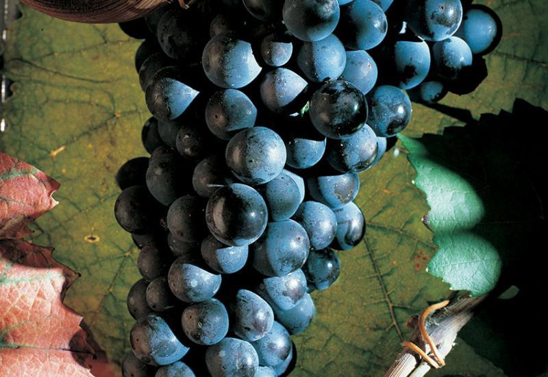 Pinot Noir ©CIVC