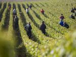 Coopération champenoise - Terre de Vins